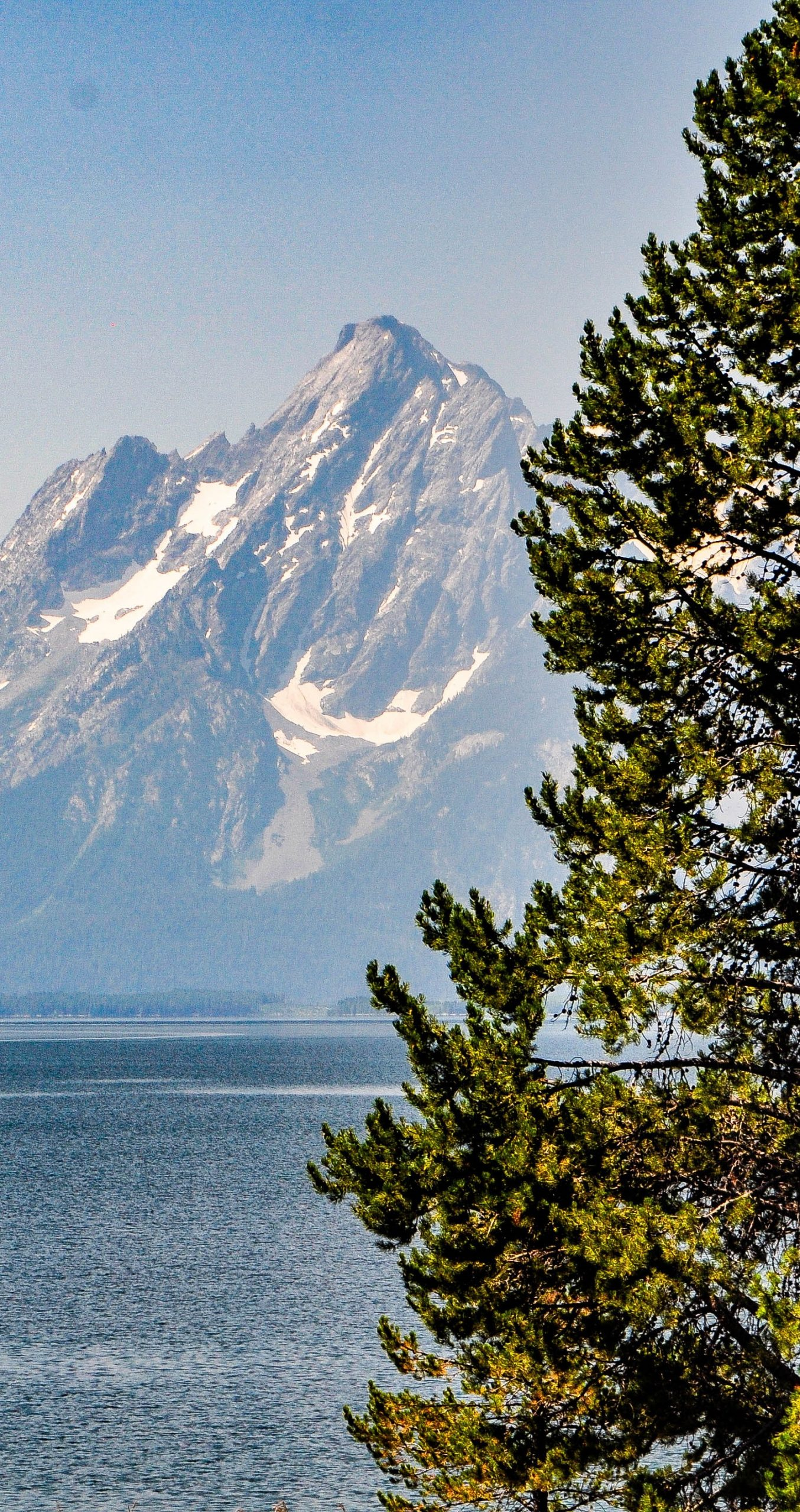 Tree in front of a view of Jackson Lake and the Grand